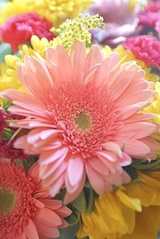 affordable cremation service code of ethics flowers
