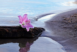 Ash Scattering Beach and Flower